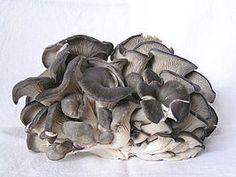 2 Gewone oesterzwam.jpg  De vorm lijkt op de schelp van een oester. Sinds 1980 wordt deze paddenstoel in Nederland op geprepareerd stro gekweekt waaraan het broed is toegevoegd. In het wild groeien ze op boomstammen en oude stronken. Er zijn lichtgrijze, lichtpaarse en gele oesterzwammen verkrijgbaar.