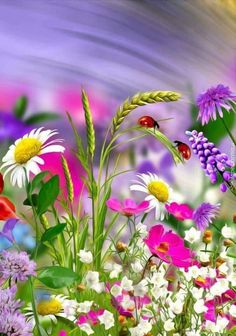Flores coloridas Flores coloridas The post Flores coloridas appeared first on Easy flowers. Beautiful Flowers Garden, All Flowers, Exotic Flowers, Amazing Flowers, Pretty Flowers, Colorful Flowers, Spring Flowers, Pictures Of Flowers, Cosmos Flowers