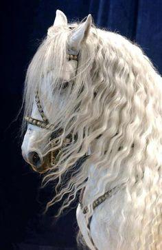 Horse ♥ #white #mane #horses #mare #stallion #equine