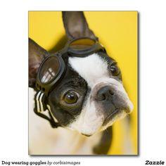Dog wearing goggles postcard