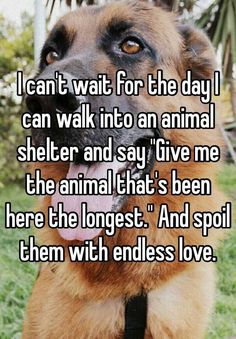 """I+can't+wait+for+the+day+I+can+walk+into+an+animal+shelter+and+say+""Give+me+the+animal+that's+been+here+the+longest.""+And+spoil+them+with+endless+love.+"""