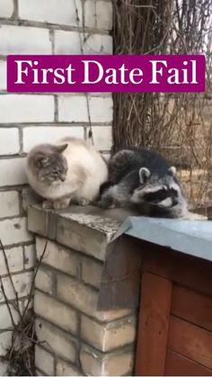 Cute Animals With Funny Captions, Cute Wild Animals, Funny Animal Jokes, Funny Cute Cats, Cute Baby Cats, Funny Pets, Funny Cat Videos, Cute Little Animals, Cute Animal Photos