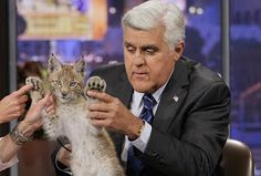Jay Leno and cats - Google Search