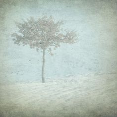 'The Lonely Tree' by artskratches on artflakes.com as poster or art print $22.17
