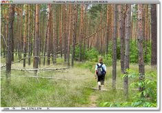 A photo of someone walking through the forest. Image licensed from iStockphoto by Photoshop Essentials.com. Inverted image color tutorial