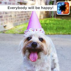 SPRIGGY CELEBRATES Today is Love Your Pet Day - so big or small feathered or furry mischievous or cuddly - tell us what you love most about your pet Happy Birthday Funny Dog, Happy Birthday Ecard, Birthday Wishes Funny, Birthday Greetings, Free Birthday, 40th Birthday, Birthday Parties, Love My Dog, Pets