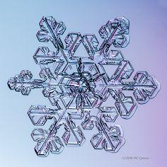 Snowflake Photos, January 13, 2016 | Flickr - Photo Sharing!