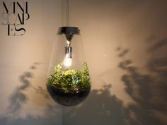 Pendant light with terrarium from Miniscapes Light Bulb Terrarium, Terrarium Diy, Everything Is Illuminated, Hanging Plants, Flat Design, Lighting Design, Interior Architecture, Planters, House Design