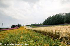 Farm-Tomita-reality-check-3251.JPG