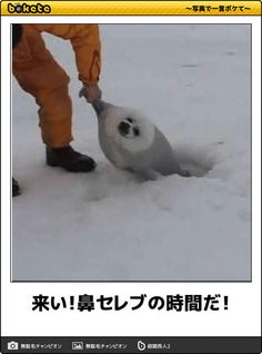 画像 Haha Funny, Funny Dogs, Funny Animals, Cute Animals, Hilarious, Funny Images, Funny Photos, Cute Seals, Japanese Funny