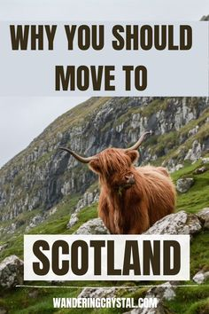 Why you should move to Scotland, moving to Edinburgh Scotland, Moving to Scotland from US, Moving to Scotland from Canada, Moving to Scotland tips, Moving to Scotland packing, living in Edinburgh Scotland, Pros and Cons of Living in Scotland, living in Scotland Scottish Highlands, living in Scotland aesthetic, living in Edinburgh, Moving to Scotland from America, expat life living abroad, Scotland travel, wanderingcrystal, moving to Scotland #Scotland #Schottland #Ecosse #Escocia #Edinburgh
