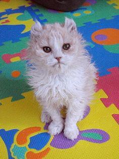 マロンの物語 feat.猫カフェ Cats-ラパーマMix