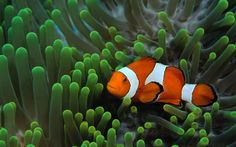 ocean life pictures | Tag: Ocean Life Wallpapers, Backgrounds, Photos, Pictures,and Images ...