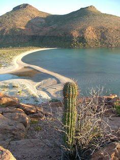 A magical cove in Baja ~ Seas kayaking trips and Island Hopping
