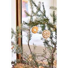 dried citrus christmas decorations ..