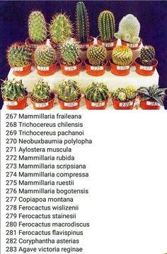 Cactus flower – Home Decor Gardening Flowers