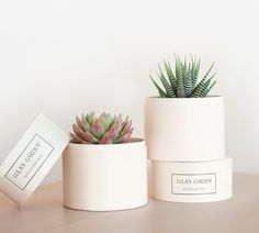 Not Your Grandmother's Flowers: 7 Chic Alternative Online Flower Delivery Services
