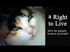 A RIGHT TO LIVE, STOP animal cruelty !  Award-winning video (HD wide final version)