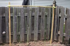 Bamboo Bean Trellis With Loose Twine