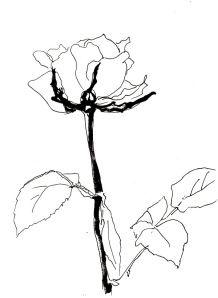 Rose Nr. 148