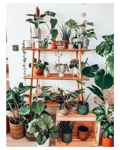 Belle Plante, Decoration Plante, Plant Shelves, Plant Decor, Indoor Plants, Decorating Your Home, Planting Flowers, Building A House, Planter Pots