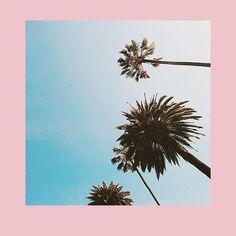 Postcard worthy views of LA 🌴 Pantone 2016, Casetify, Dandelion, Photo And Video, Flowers, Plants, Instagram, Wallpapers, Dandelions