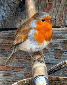 Small Birds, Little Birds, Colorful Birds, Pet Birds, Beau Film, Beautiful Birds, Animals Beautiful, Tier Fotos, Bird Drawings