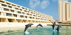 Swim with the dolphins at Dreams Cancun Resort and Spa.