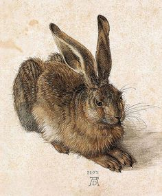 Young Hare by Albrecht Durer the Younger