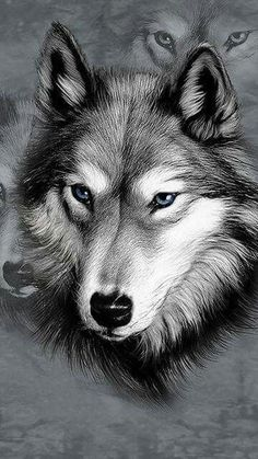 Animals wolf drawing black-and-white sketch blueeyes Wolf Tattoos, Wolf Spirit, Spirit Animal, Beautiful Wolves, Animals Beautiful, Animal Drawings, Pencil Drawings, Drawing Animals, Wolf Drawings
