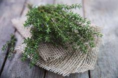 Dez ervas aromáticas para cultivar em casa, sem mistério - Casa e Decoração - UOL Mulher