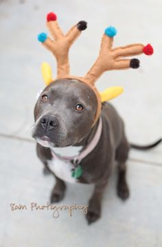 People say pitbulls are vicious but there only that way because of there owners.Just look at this guy