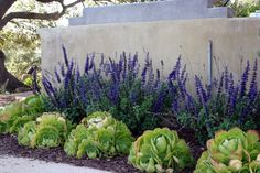contemporary western water wise landscaping - Google Search