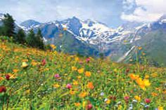 Europe wild flowers basking on top of the mountain ranges