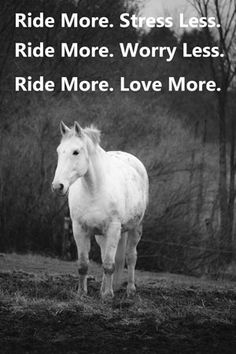 Words to live by! Inspirational Horse Quotes, Motivational Quotes, Stress Less, Positive Thoughts, Feel Good, Positivity, Horses, Feelings, Live
