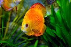 Image result for beautiful fish under the sea
