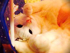 cat ごろにゃん2