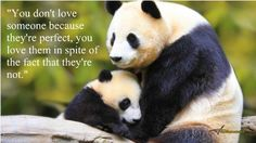 cute pictures of animals with quotes - Google Search