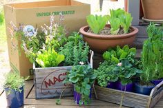 Herb and Salad Garden Box