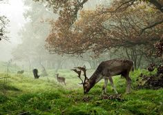 Herten in de mist