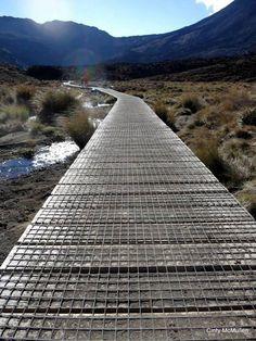 ( start of ) Alpine Crossing - national park -                      (New Zealand )