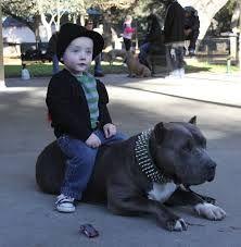 """Képtalálat a következőre: """"xxl pitbull"""""""