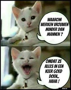Dit is lachen ha ha ha . Funny Animal Memes, Funny Cats, Funny Animals, Funny Jokes, Hilarious, Minion Humour, Just For Laughs, Funny Moments, Funny Photos