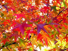 Autumn Leaves - Bing images