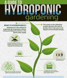 Vertical Farming Facilities : Eco Farming