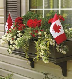 Patriotism In Bloom. Celebrate our country's birthday by dressing your planter with #Canadian #flags along side festive red and white annuals.