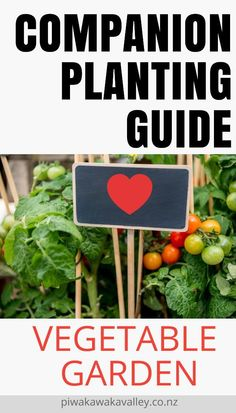 Vegetable Garden Companion Planting can be a confusing business. It takes a while to get your head around companion plant combinations that work and don't work together. Below, you can grab your free companion planting chart PDF. Kinds Of Vegetables, Planting Vegetables, Organic Vegetables, Growing Vegetables, Growing Plants, Backyard Vegetable Gardens, Fruit Garden, Gardening For Beginners, Gardening Tips
