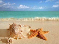 Hummel Estate Lo mejor de la zona de Punta Cana Bavaro