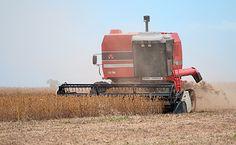 Kun økologisk foder er uden GMO