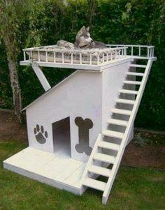 Casa para perros, ellos tambien se lo merecen